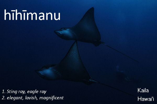hīhīmanu - lavish, elegant, sting ray or eagle ray
