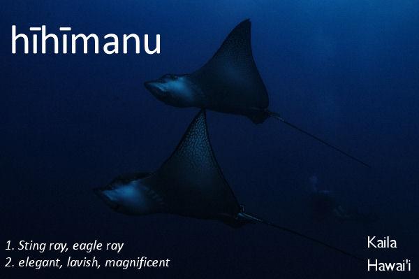 hīhīmanu - lavish, elegant, sting ray or eagle ray